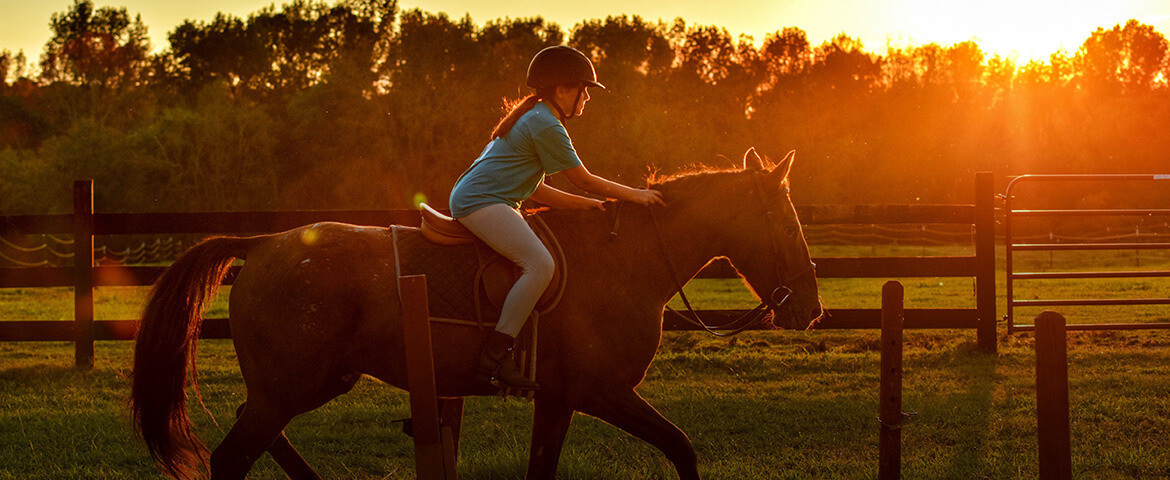 Everything for Horse and Rider