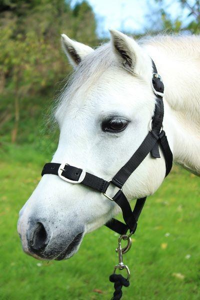 Black - Pony