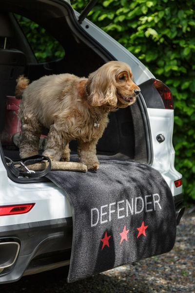 Defender image #2