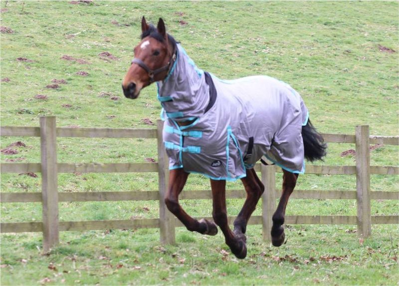 JUMP ALL IN ONE FLY RUG image #3