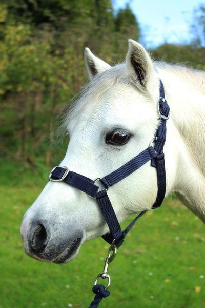 Navy - Pony