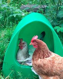 Poultry Palace Chicken Nest Box