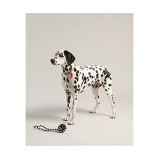 Joules Rubber and Rope Dog Toy