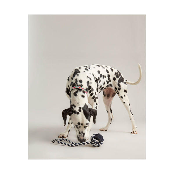 Joules Rubber and Rope Dog Toy image #2
