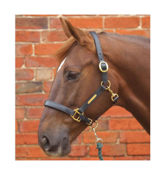 Leather Padded Headcollar image #1