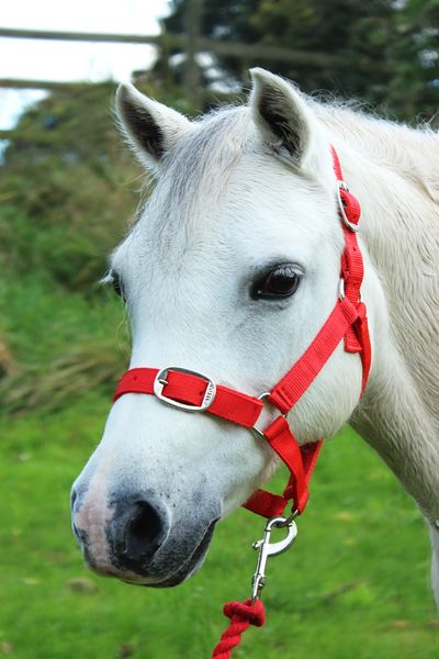 Red Nylon Headcollar and Lead Rope