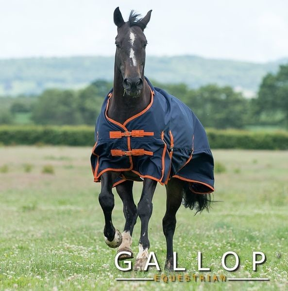 Front view of Gallop Trojan 100 rug